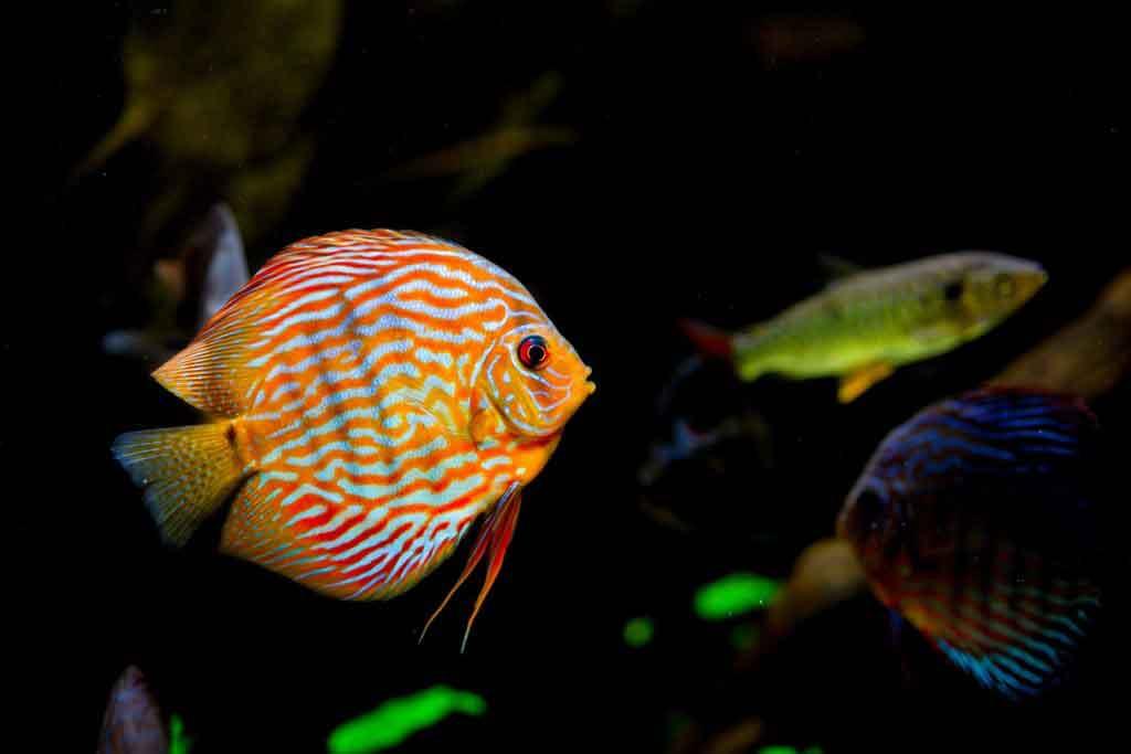 Kescher für Aquarium