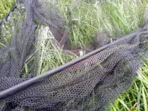 Keschernetz