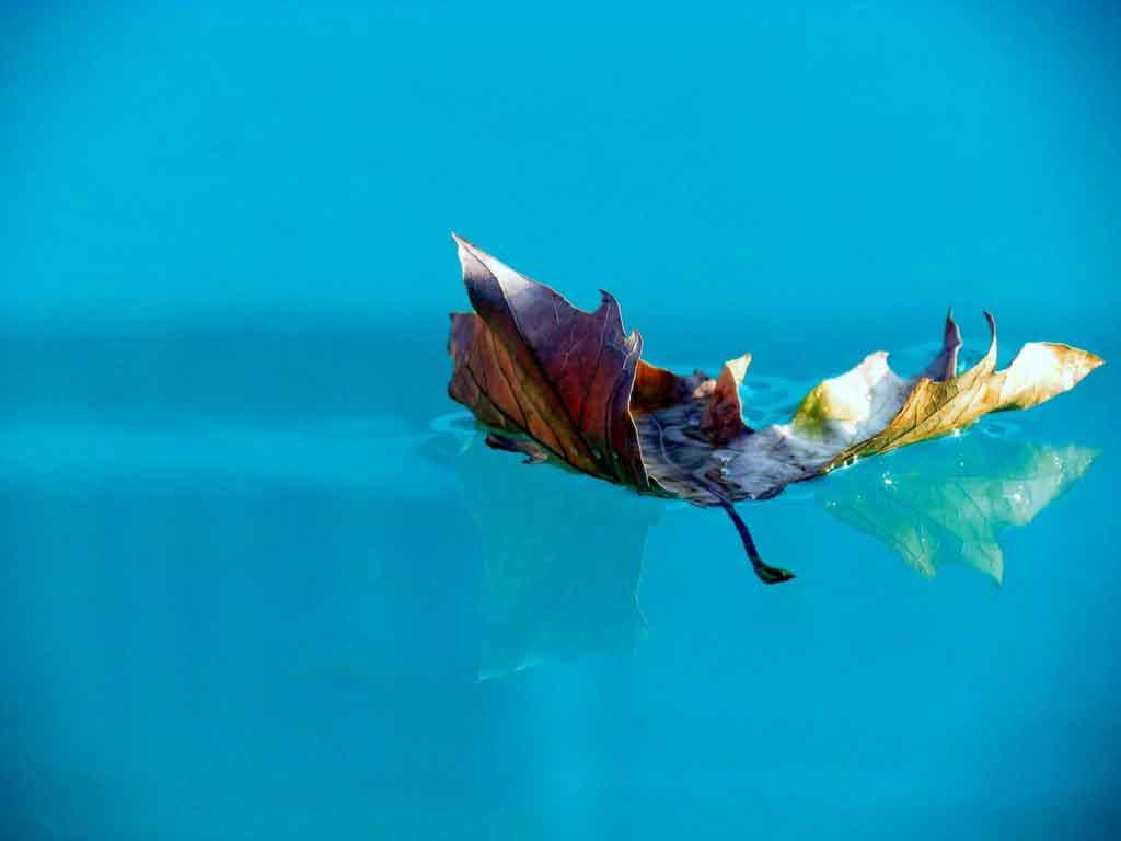Kescher angeln pool teich aquarium kescher.net
